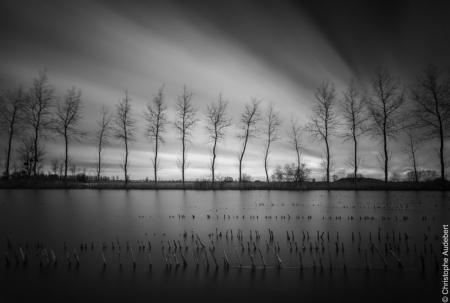 Champs de maïs inondés par les pluies devant une rangée d'arbres en contre-jour. Prise de vue en pose longue en Bretagne, France. Noir et blanc.